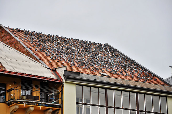 A2B Pest Control are able to install spikes to deter birds from roofs in Greenhill.