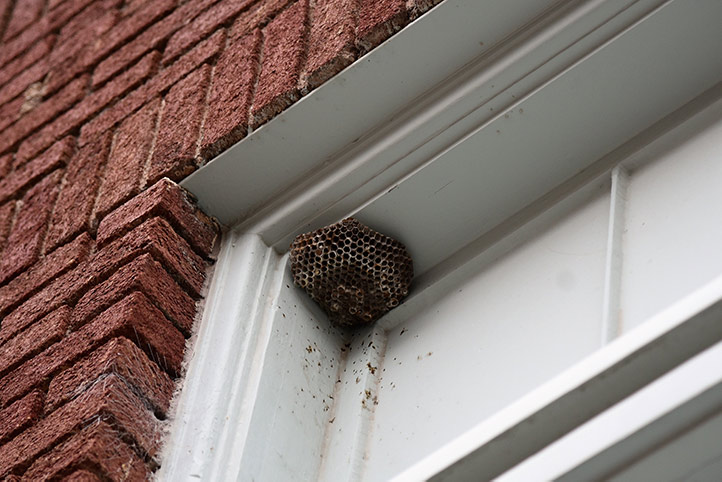 We provide a wasp nest removal service for domestic and commercial properties in Greenhill.
